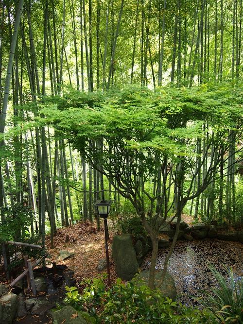 Shizukatei Tea Garden in Kobe: Owner's front garden, bamboo trees