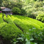 Shizukatei: Hidden Tea Garden in Kobe, Japan