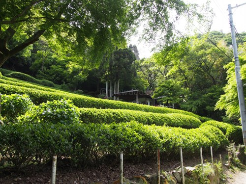 Kobe Tea Garden in Kobe: Up front!