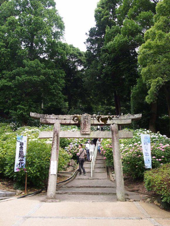 Ajisai Festival at Kibitsu Shrine: Starting point