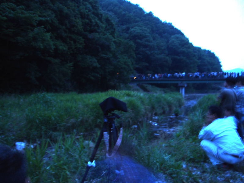 Japanese Fireflies in Hokubo, Maniwa City: People on standy
