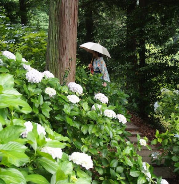 Ajisai Festival at Kibitsu Shrine: Kimono shots