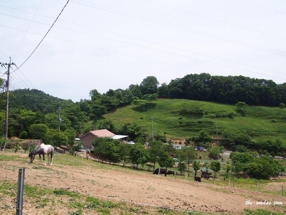 Masuda Dairy Farm, Okayama: upper view