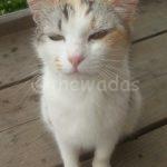 Matsuda Dairy Farm, Okayama: Kitty at post