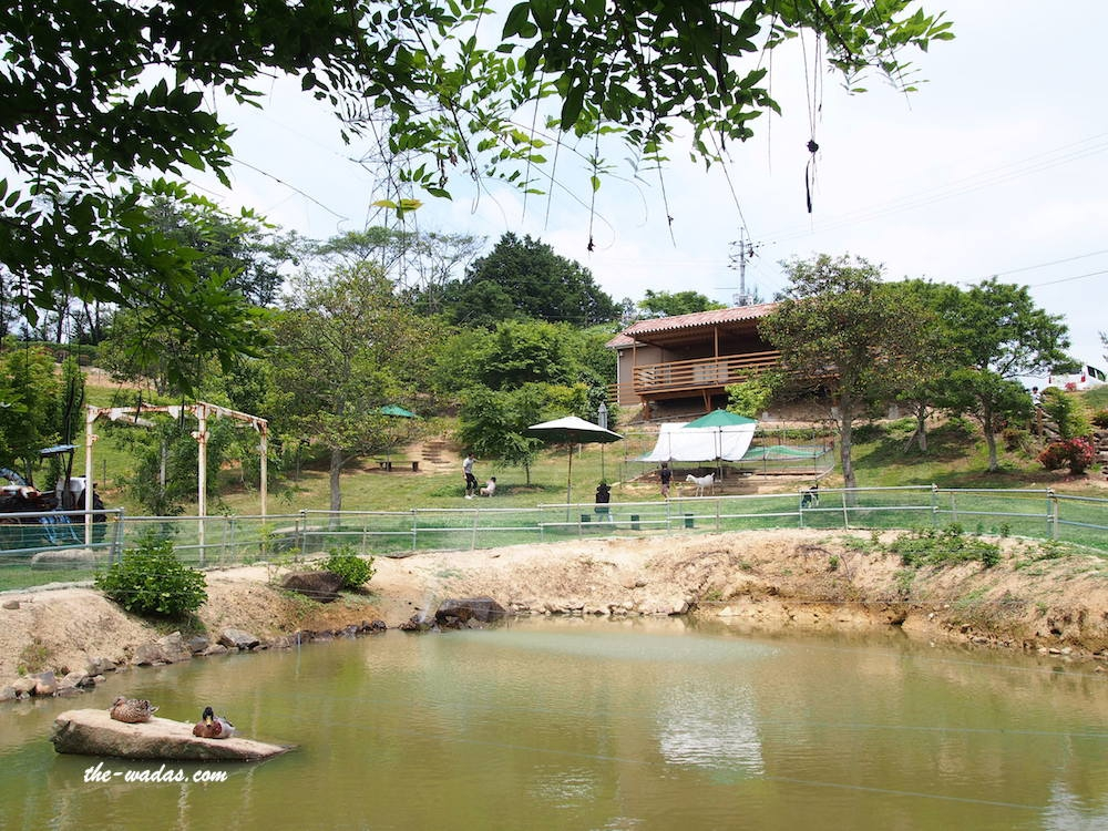 Masuda Dairy Farm, Okayama: Pond and terrace