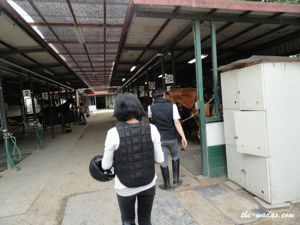 Horse Riding: Meeting the horses