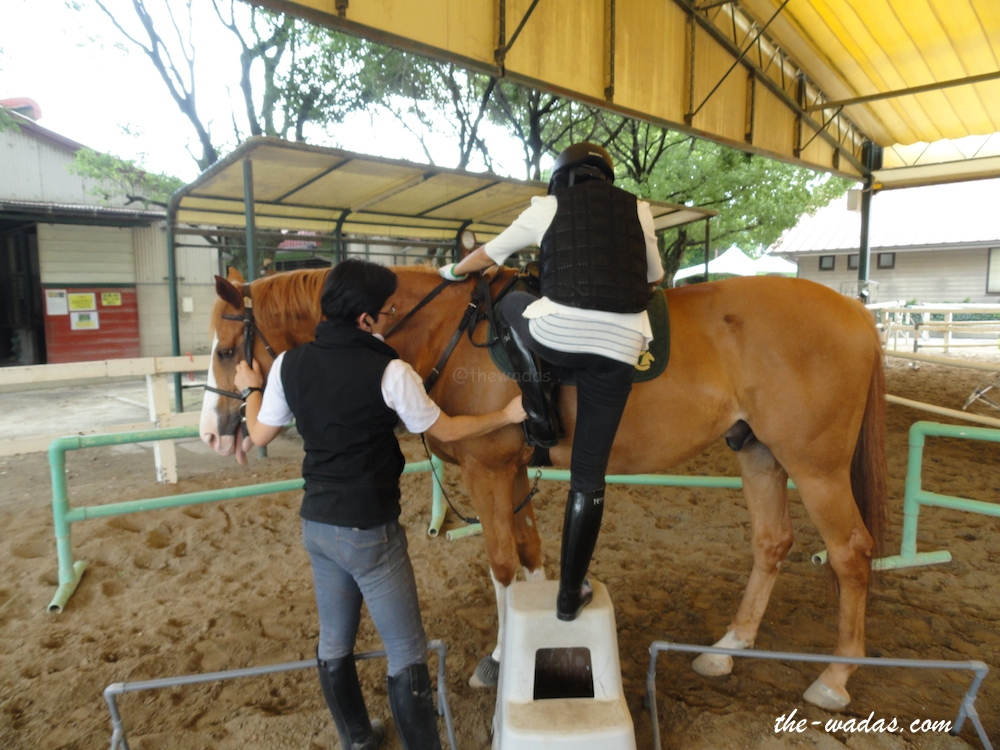 Horse Riding: Step into the kicking strap