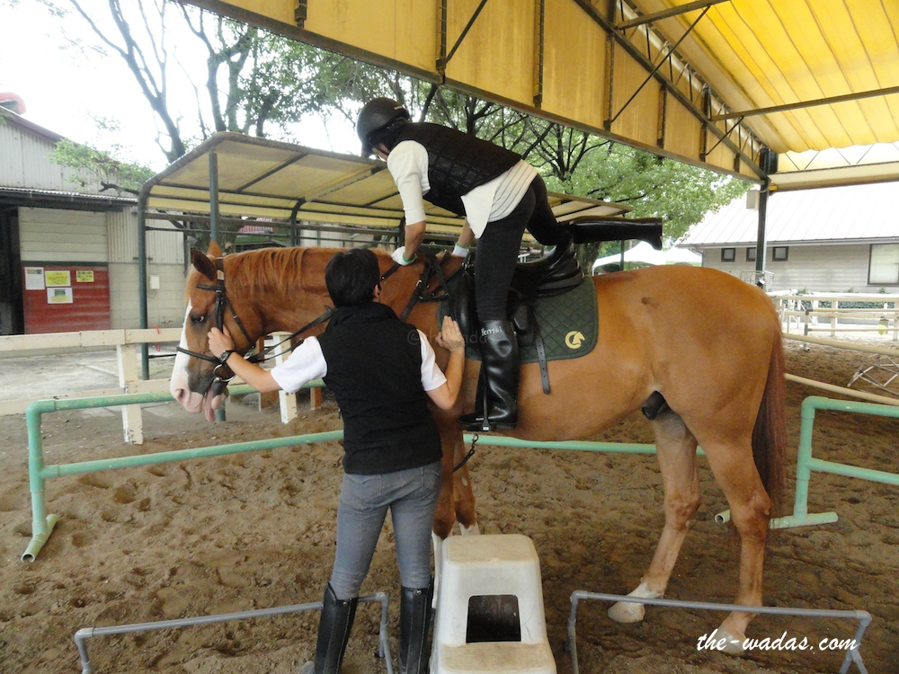 Horse Riding: Ride on
