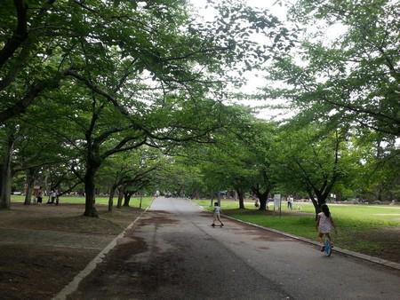 Sakazu park path