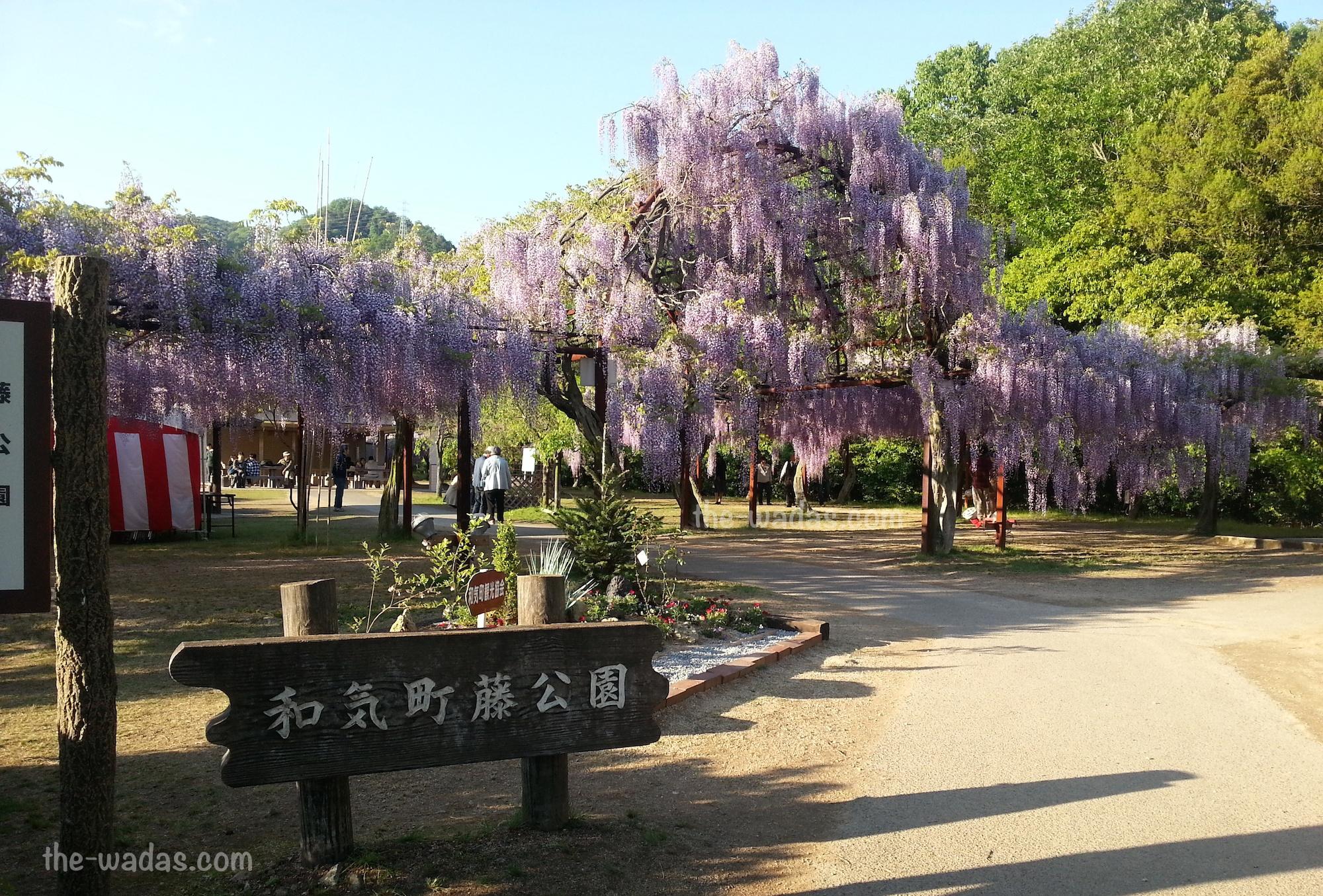 Wisteria Flower Festival, Fuji Park: entrance