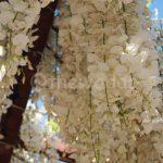 Wisteria Flower Festival, Fuji Park: white wisteria