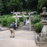 Ajisai Flower Festival in Kibitsu Jinja: ajisai stairway start
