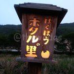 Ajisai (Wisteria) Flower and Firefly Festivals 2016