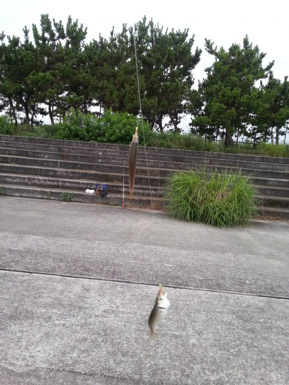 fishing_in_ashiyahama_fish_02