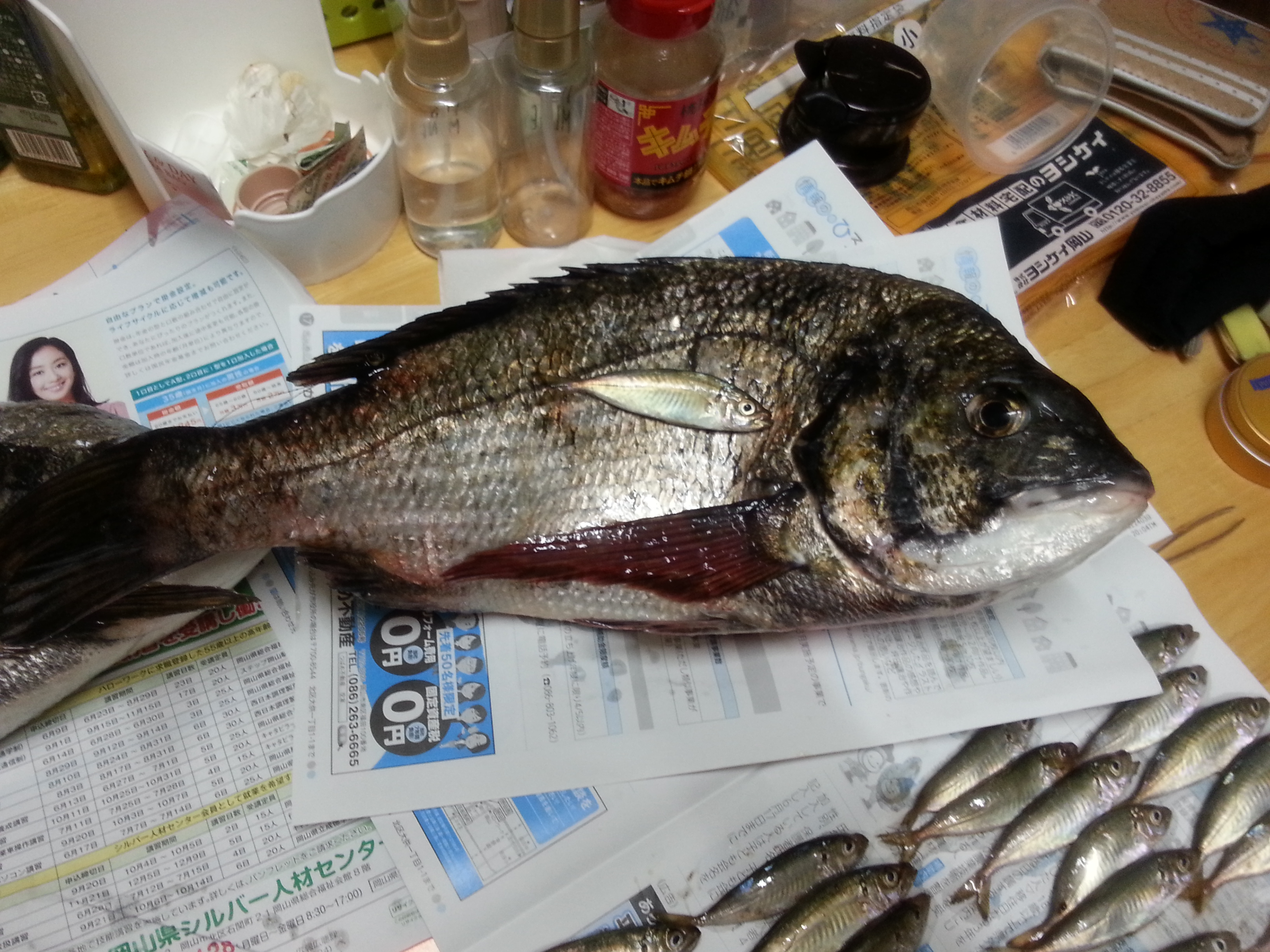 fishing_in_ashiyahama_sea_bream
