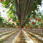Strawberry paradise.