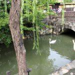 Swan (floating)
