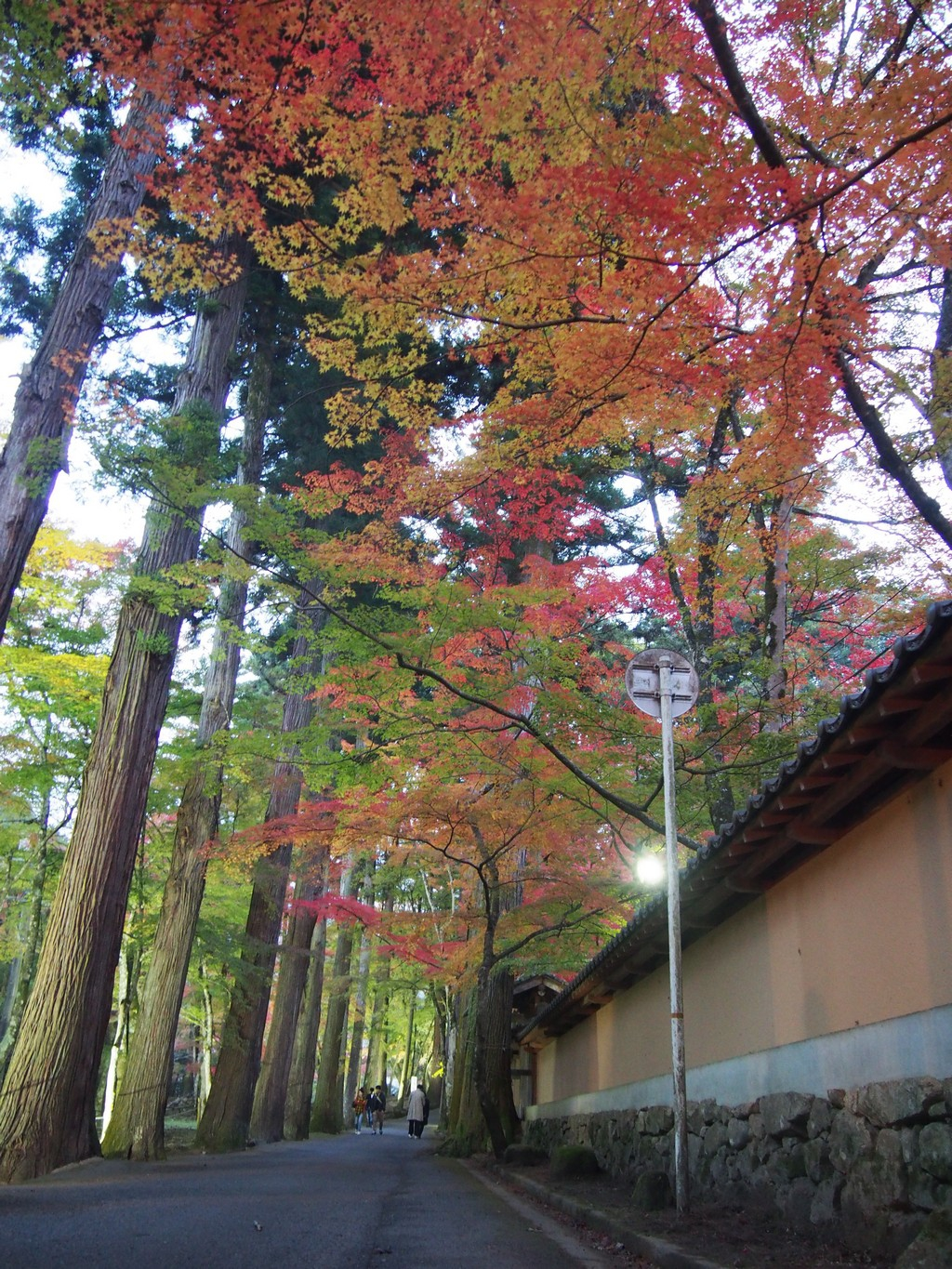 autumn leaves at buttsuji temple