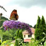 Hiruzen Herb Garden Herbill in Maniwa City