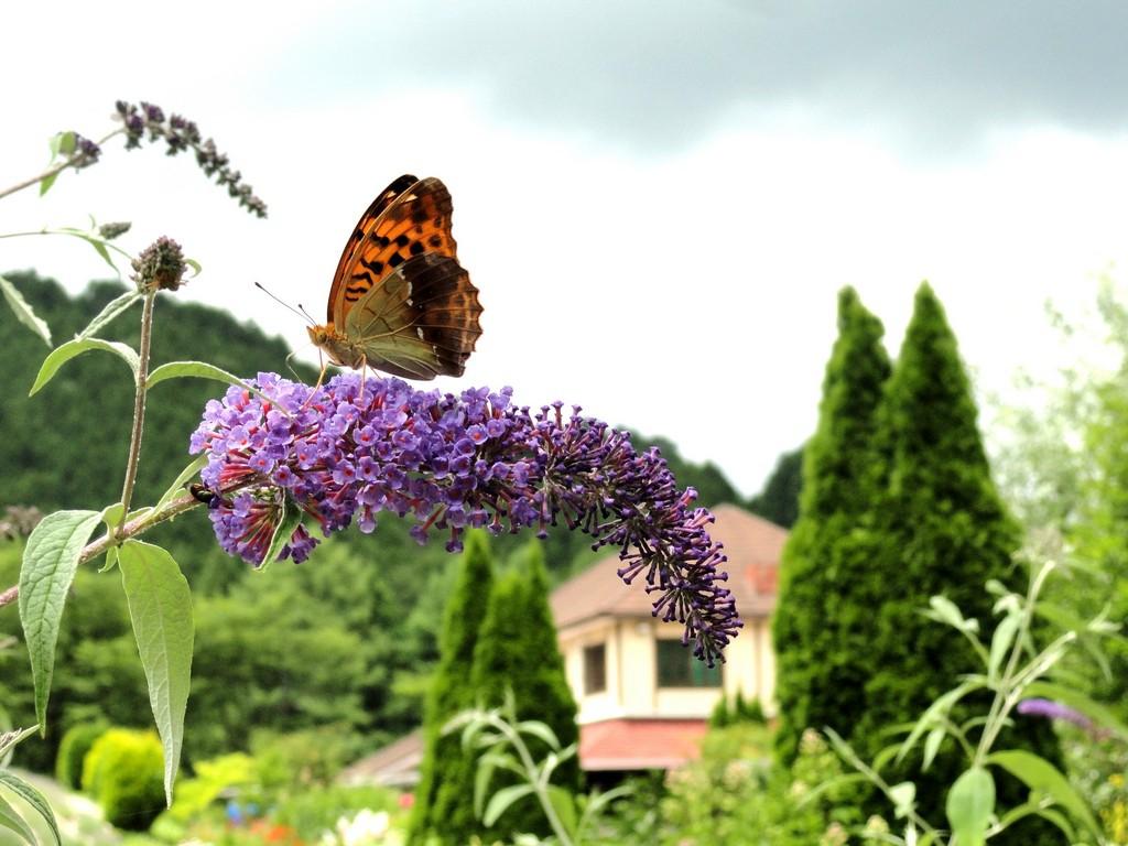 hiruzen herb garden herbil