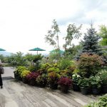 hiruzen_herb garden_herbil_tarrace