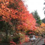 Okayama's Top Autumn Leaf Spot: Okutsukei Valley