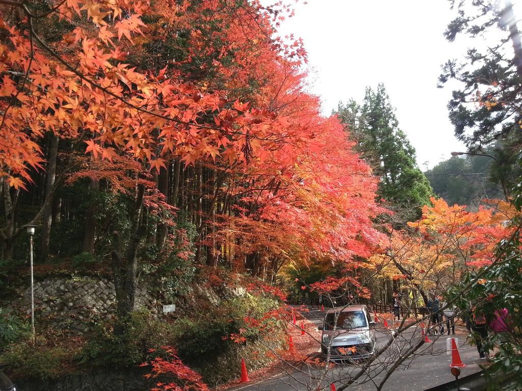okayama's top autumn leaf spot okutsukei valley