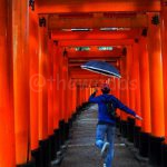 Passing Through 1000 Gates! Senbon Torii at Fushimi Inari Shrine in Kyoto