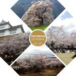 Top Cherry Blossom Spots in Okayama