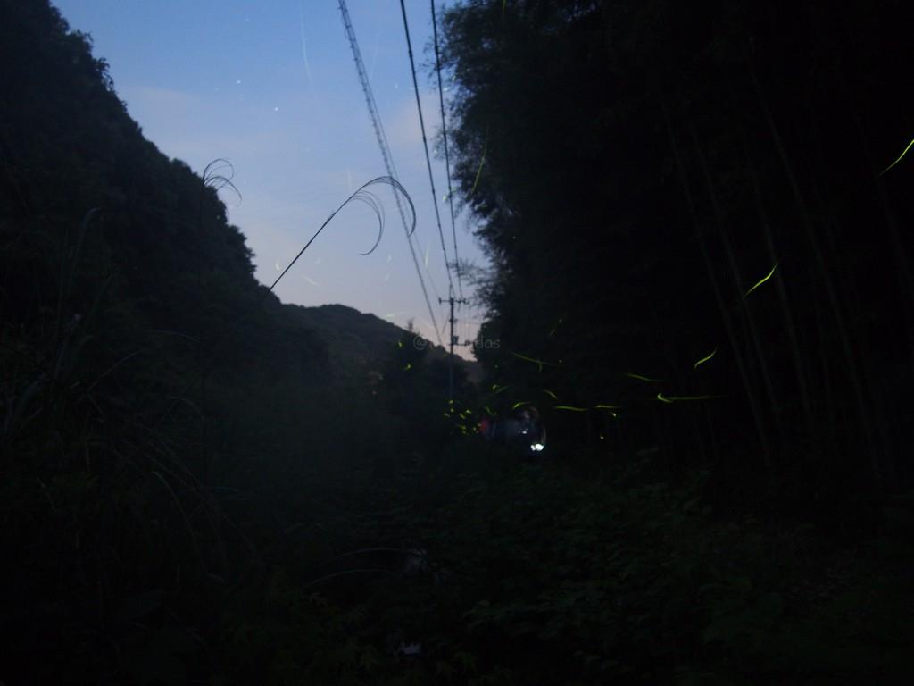Firefly Watching in Yugasan, Kurashiki City