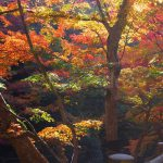 Autumn Leaves in Gokei Valley, Soja City