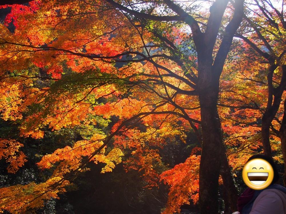 Autumn Leaves in Gokei Valley, Soja City