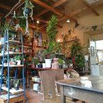 Plants for sale.