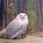 Kurashiki Owl's Forest