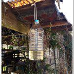 Try DIY Japanese Wasp Trap