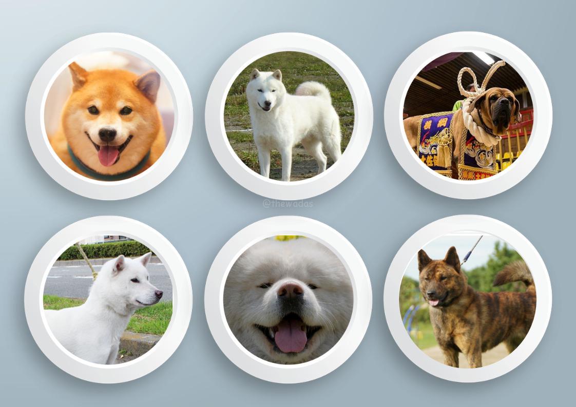 Six Major Japanese Dog Breeds