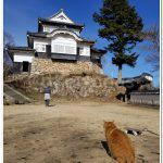 Takahashi Castle and The Cat Lord Sanjuro