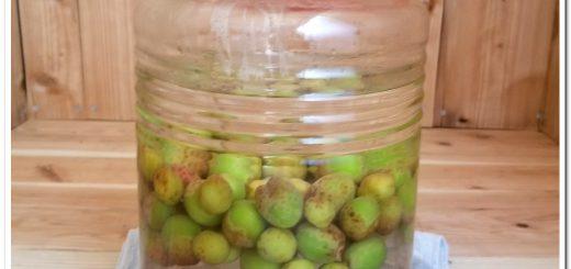 how to make homemade umeshu (Japanese plum wine)